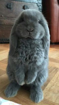 Images Of Cute Animals Easy To Draw beyond Funny Cute Baby Animals Pictures Cute Little Animals, Cute Funny Animals, Cute Dogs, Baby Animals Pictures, Cute Animal Pictures, Funny Pictures, Baby Pictures, Cute Baby Bunnies, Cute Babies