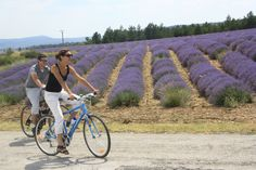 #Cycling in the #lavender country  ©Alain Hocquel-ADTVaucluse #Vaucluse #Provence #vélo