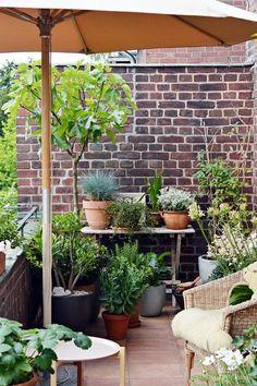 Afbeeldingsresultaat voor balkon inrichting balkon in 2019 - сад на балконе, двор Potted Plants Patio, Balcony Plants, Indoor Plants, Balcony Gardening, Small Gardens, Outdoor Gardens, Small Terrace, Rooftop Garden, Garden Bar