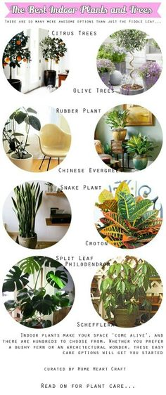 Plantas de interior. ..