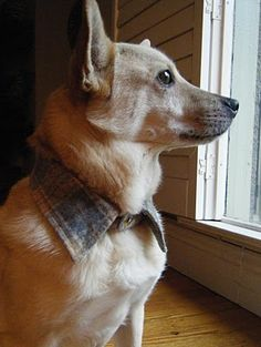 OMG, no collared shirt's gonna be safe in my house! Sew DoggyStyle: Easiest Upcycled Dog Collar Ever!