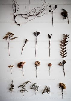 consider it done, pt. 2  ((a pair and a spare . diy fashion: DIY HOME: BOTANICAL WALLS))