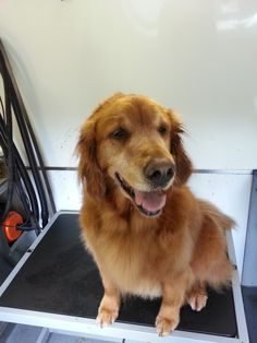 Leo #Dog #Grooming #NorthVancouver http://www.aussiepetmobile.ca/northshore/