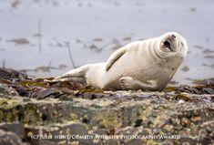 Me parto...  Este concurso de fotografía premia las imágenes más absurdas y divertidas del mundo animal