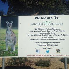 New Welcome Sign #angleseagolfclub #kangaroos #anglesea by angleseagolf http://ift.tt/1KosRIg