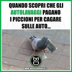 Seguici su youtube/bastardidentro #bastardidentro #piccioni #auto www.bastardidentro.it