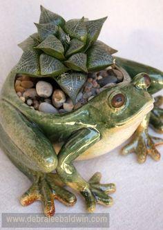 Haworthia emelyae var. comptoniana in a frog pot.