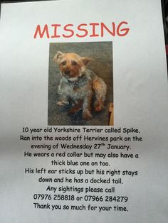 **Please share** Our beautiful dog Spike went missing in Hervines Park in Amersham, Buckinghamshire on Wednesday. Please call the numbers on the poster if you have seen him or have found him, Thank you.   Via ptp.