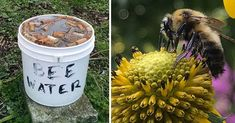 A list of things to do if you want to save the bees. Farmers Only, Raising Bees, Bee Do, Bee Friendly, Backyard Paradise, Save The Bees, Bees Knees, Bee Keeping, Native Plants