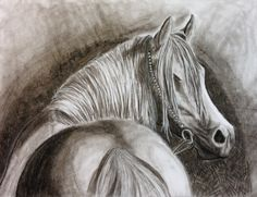 Horse done in charcoal by Nicole Bueckert.