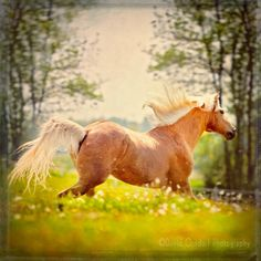 Horse Digital Download Photograph Horse running in a field