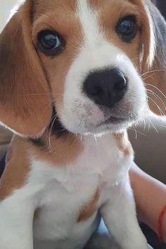 Cute Wild Animals, Cute Little Animals, Cute Funny Animals, Funny Dogs, Cute Baby Dogs, Cute Little Puppies, Dogs And Puppies, Doggies, Cute Puppy Pictures