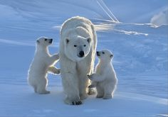 Our Mom is the best!  by Nikolai Zinoviev