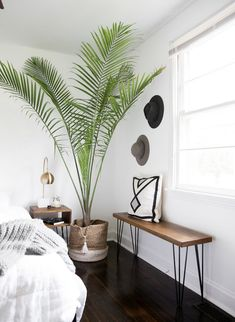 large indoor plant, palm tree in a rattan basket pot cache, bedroom with . Neutral Bedroom Decor, Bedroom Green, Large Bedroom, Modern Bedroom, Bedroom Ideas, Bedroom Corner, Bedroom Wall, Diy Bank, Large Indoor Plants