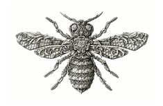 Detailed insect illustrations by Alex Konahin - Lost At E Minor: For creative people