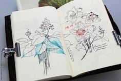 sketchbook. Me gust la sombra rallada sobre las hojas de abajo. Y especificar la ampliación de la flor.