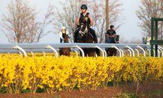 Horses | Scoop.it!