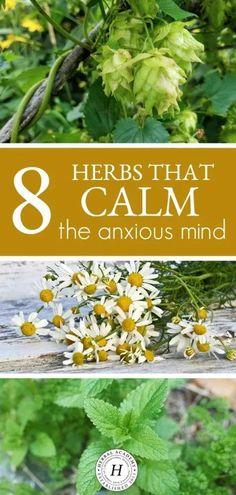 Healing Herbs, Medicinal Plants, Natural Healing, Holistic Healing, Natural Oil, Herbal Plants, Natural Herbs, Natural Health Remedies, Herbal Remedies