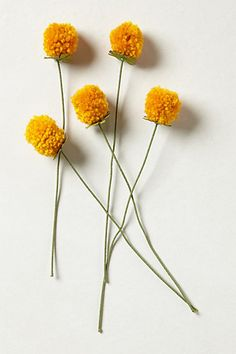 Pompom dandelions!  would be a cute idea for kids to make for Mother's Day gifts or Rogation Sunday, or more