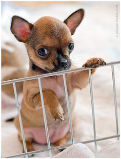 what a cute puppy