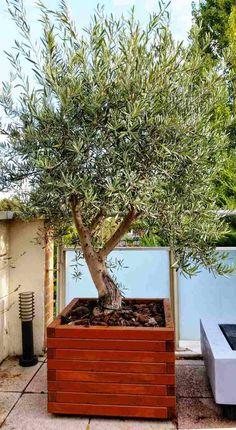 aménagement terrasse et balcon avec olivier en bac en bois carré