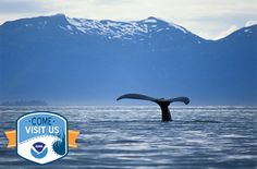 Have you visited a marine protected area? With more than 1,700 in U.S. waters, the chances are that you have! #ComeVisitNOS