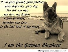 This is what a German Shepherd is all about. This breed is so loyal.