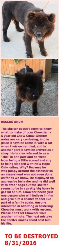 SAFE 09/04/16 --- Brooklyn Center  My name is CHOWDER. My Animal ID # is A1086452. I am a male brown chow chow mix. The shelter thinks I am about 5 YEARS old.  I came in the shelter as a STRAY on 08/20/2016 from NY 11233, owner surrender reason stated was STRAY.  http://nycdogs.urgentpodr.org/chowder-a1086452/