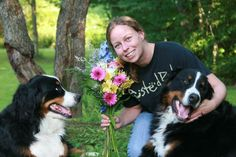 wilma adkins | He asked???? She said YES!!!!! | bernese mountain dogs ...