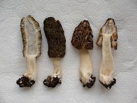 Gombamánia: Kétkörösköz kucsmagombái Stuffed Mushrooms, Vegetables, Stuff Mushrooms, Vegetable Recipes, Veggies