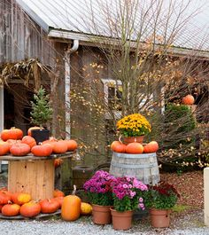 Learn how to pick your perfect pumpkin whether for baking, carving, or displaying.