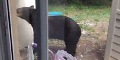 Bears try to break into Florida home