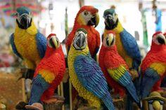 parrots - Google Search