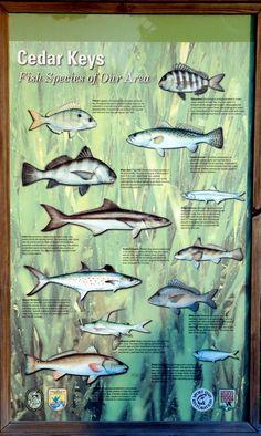 Best Fishing In Florida - Cedar Key Florida - Little Island - Big Fun Fishing Hole, Gone Fishing, Best Fishing, Fishing Boats, Florida Fish, Old Florida, Florida Keys, Go Camping, Camping Lunches