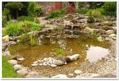 wildlife ponds - Google Search