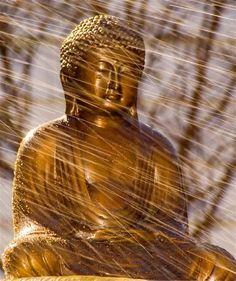 Gold Buddha in the rain