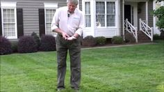 Tall Fescue Grass - Expert Lawn Care Turf Tips