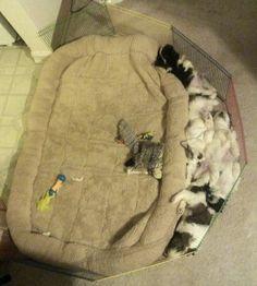 A estos #cachorros les encanta dormir en el suelo, aunque tengan una cama enorme solo para ellos... www.petclic.es
