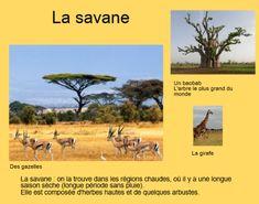 livre photo carnet de voyages - Afrique Afrique Art, Les Continents, Image Categories, Social Studies, Habitats, Activities For Kids, Animals, School, Board