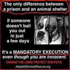 Some attorney please start a petition on Change.org in order to change our…