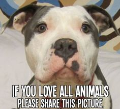 If you ♥ all animals, PIN this pic!   All about #cats & #dogs Click here