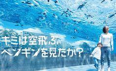 日本首個設在摩天大樓屋頂的「池袋陽光水族館」 – GOGOAdvise – Travel 旅遊日記