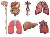 Free Medical Books Download | Ebooks online TextBooks Journals