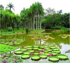 Gorgeous Promenade Gardens  Georgetown Guyana  Guyana  Pinterest  With Heavenly Some Of The Botanical Wonders Of Guyana  By Dmitri Allicock With Archaic The Kew Gardens Also The Garden School Hackney In Addition Kids Garden Games And Garden Store Berkeley As Well As Bulbs For Garden Additionally Bm Home And Garden From Pinterestcom With   Heavenly Promenade Gardens  Georgetown Guyana  Guyana  Pinterest  With Archaic Some Of The Botanical Wonders Of Guyana  By Dmitri Allicock And Gorgeous The Kew Gardens Also The Garden School Hackney In Addition Kids Garden Games From Pinterestcom