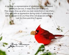 Quotes About Cardinals. QuotesGram