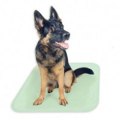 No longer worry about your pup's inside accidents with these Puppy Training Reusable Pads from Petmaker. Waterproof and absorbant for superior odor trapping, the pads are the perfect training tools for your puppy. Puppy Potty Training Tips, Dog Training School, Training Your Dog, Agility Training, Puppy Pads, Best Puppies, Aggressive Dog, Old Dogs, Dog Behavior