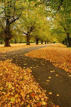 Autumn in Kingston, England