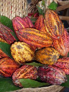 cacao del Perú