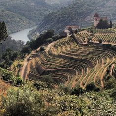 Wine terraces, Douro Valley, Portugal ~ UNESCO World Heritage Site