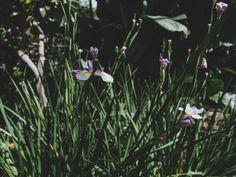 Escapade autour de Toronto - les jardins botaniques d'Hamilton Escapade, Botanical Gardens, Hamilton, Toronto, Plants, Plant, Planets